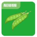 青豆短视频app